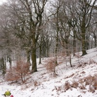 Tandle Hill dog walks, Lancashire - Image 6
