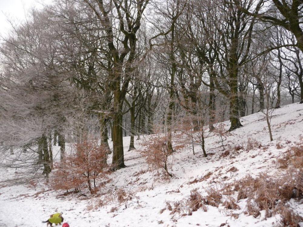 Tandle Hill dog walks, Lancashire - Image 6