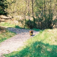 Dog walk near Kinlochewe, Scotland - Dog walks in Scotland