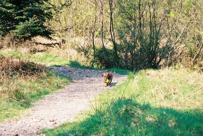 Dog walk near Kinlochewe, Scotland - Driving with Dogs