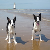 Talacre dog-friendly beach, Wales