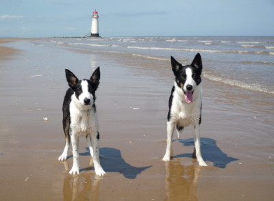 Talacre dog-friendly beach, Wales - Driving with Dogs