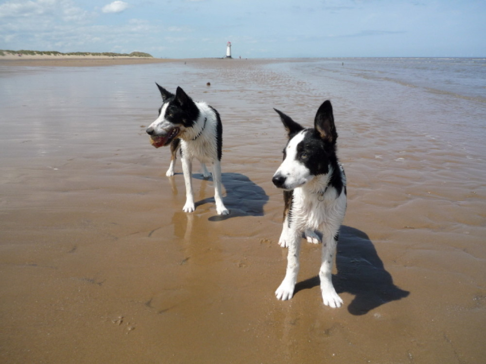 Talacre dog-friendly beach, Wales - Dog walks in Wales