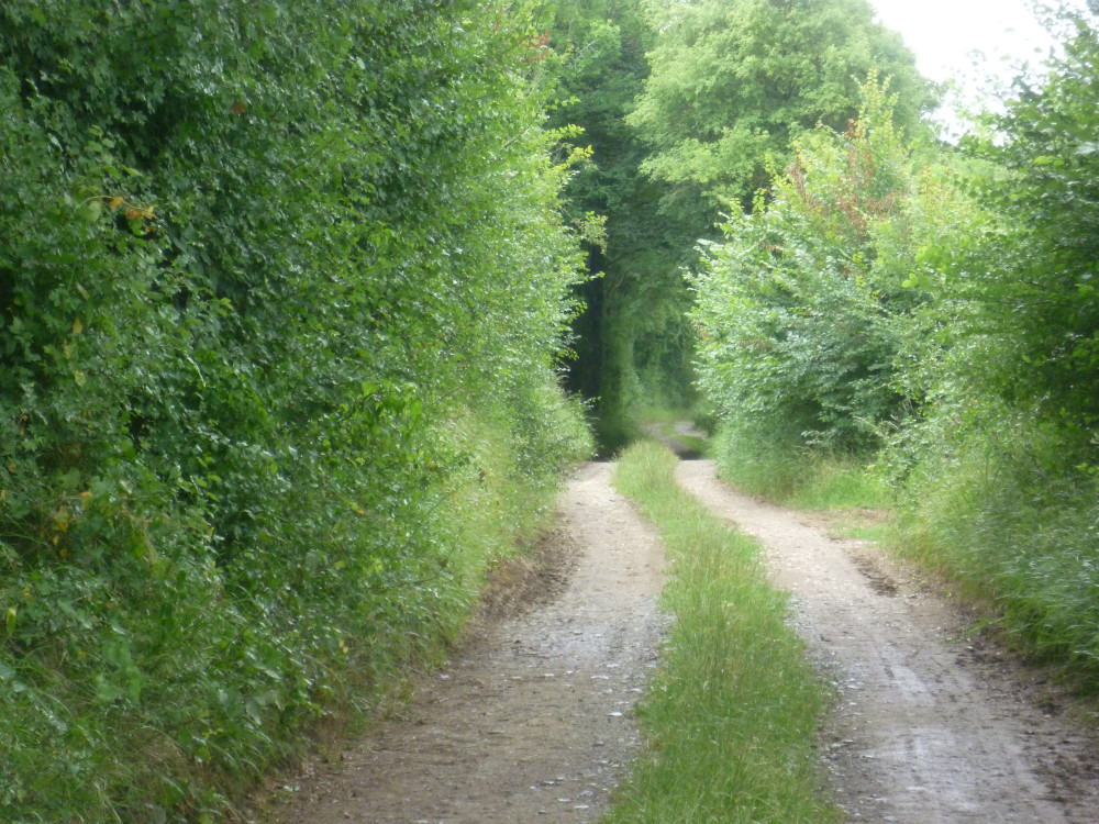 A20 Exit 19 La Prune au Pot dog walk, France - Image 4