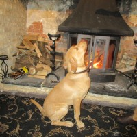 M4 and Fosse Way coaching inn with a dog walk, Wiltshire - IMG_6119.JPG