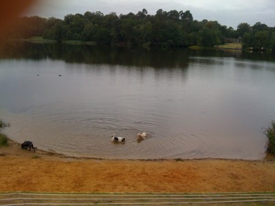 Virginia Water dog walks, Surrey - Driving with Dogs