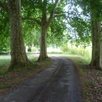 A89 exit 13 dog walk near Mussidan, France - Image 4