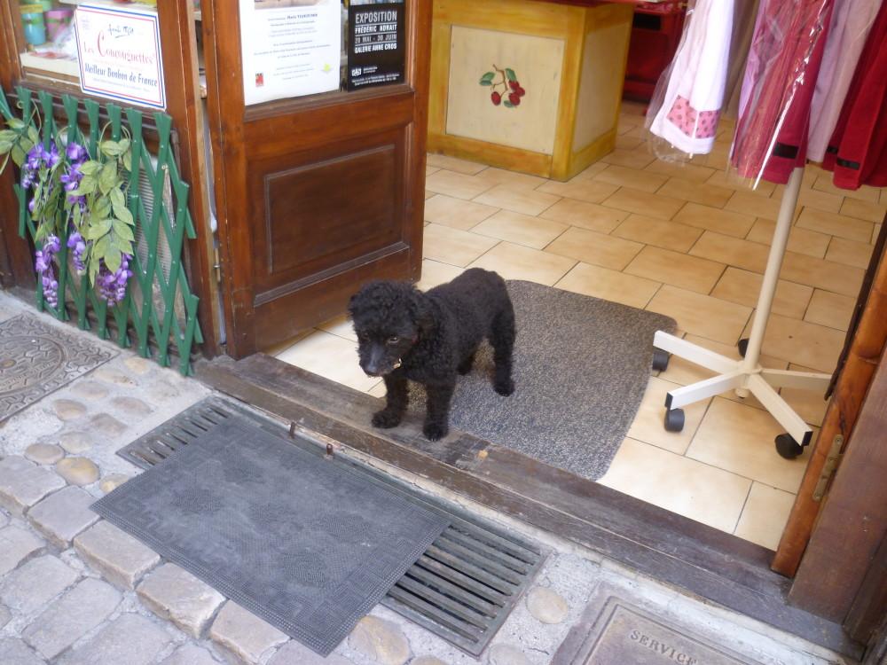 A9 Exit 34 doggiestop in Pézenas, France - Image 3