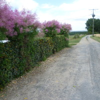 A10 exit 27 Poitiers Battleground family dog walk, France - Image 3