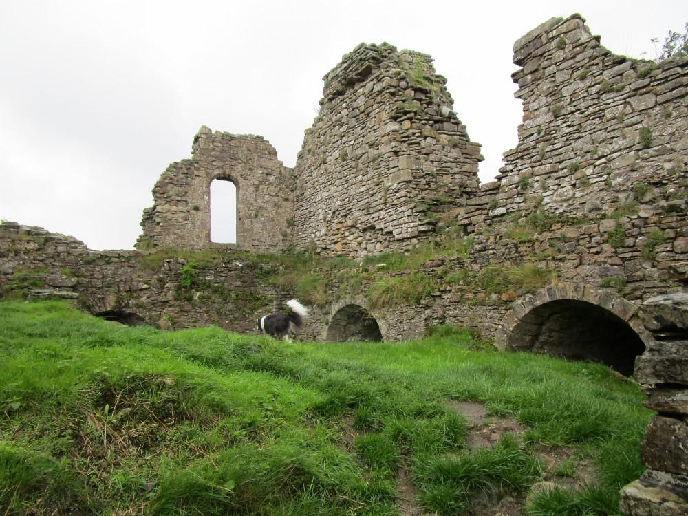 Pendragon doggiestop near Kirkby Stephen, Cumbria - Dog walk in the Yorkshire Dales National Park