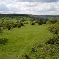 M5 Junction 11A dog walk near Cheltenham, Gloucestershire