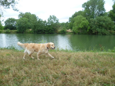 A11 exit 13 Loir riverside doggiestop, France - Driving with Dogs