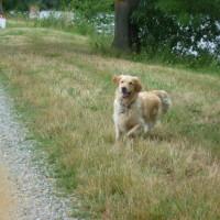A11 exit 13 Loir riverside doggiestop, France - Image 4