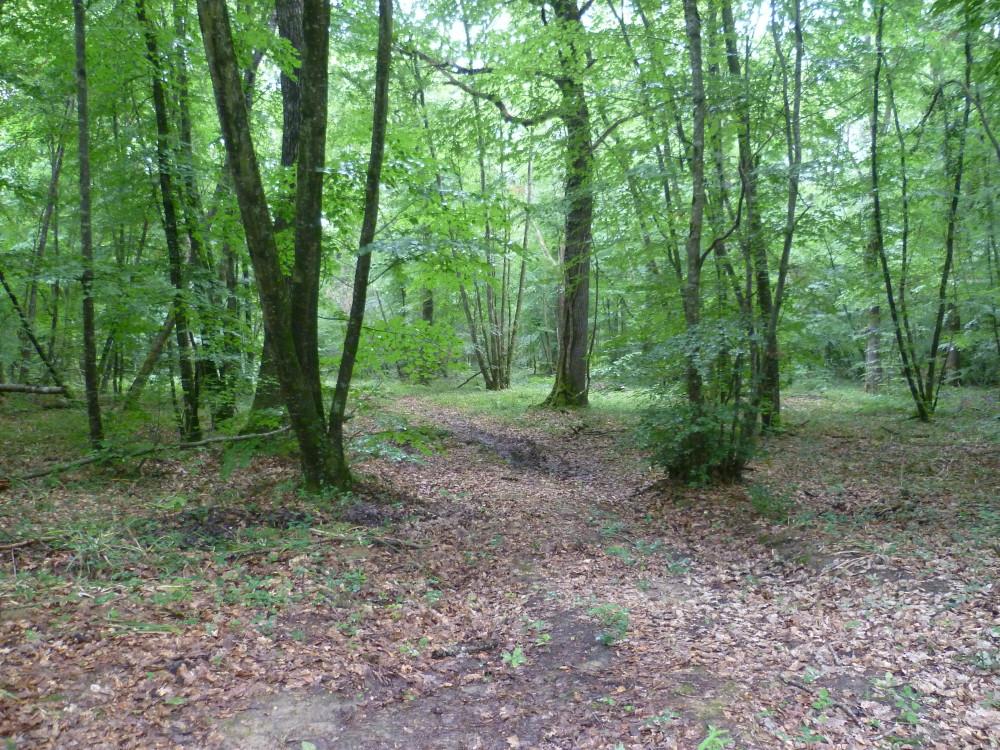 A20 Exit 14 near Châteauroux dog walk, France - Image 2