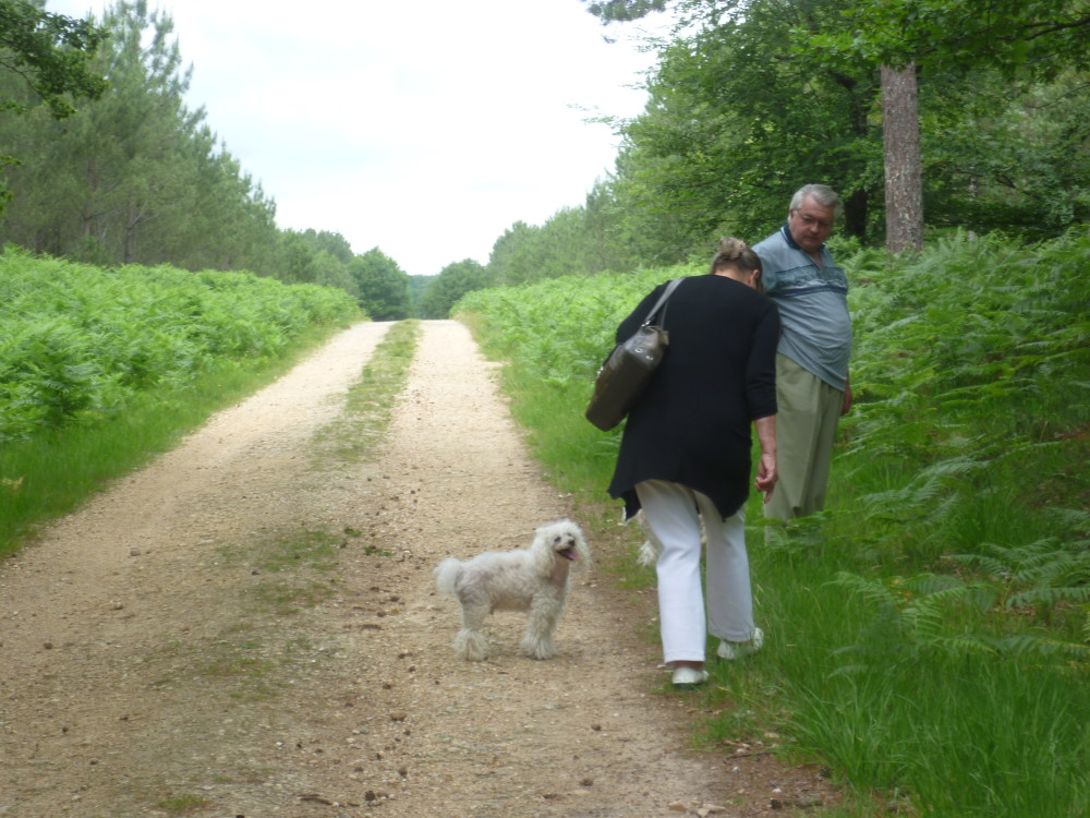 A28 exit 25 dog walk near Berce, France - Image 1