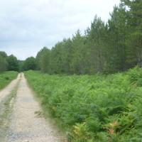 A28 exit 25 dog walk near Berce, France - Image 3