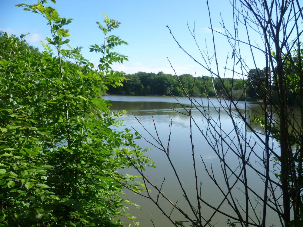 A11 Exit 1 dog walk on the Golden Pond, France - Image 2