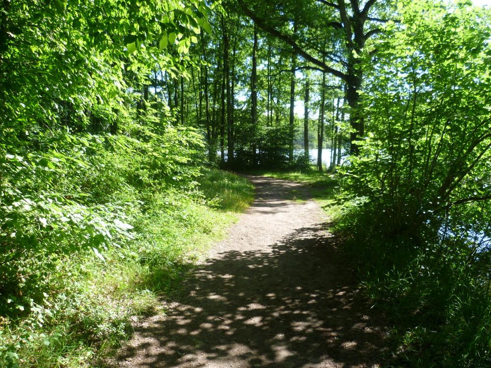 A11 Exit 1 dog walk on the Golden Pond, France - Image 3