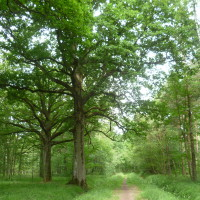 Rambouillet forest dog walks, France - Image 2
