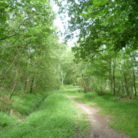 Rambouillet forest dog walks, France - Image 3