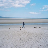 A96 dog-friendly beach in Nairn, Scotland - Dog walks in Scotland
