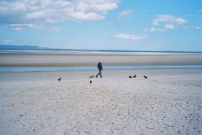 A96 dog-friendly beach in Nairn, Scotland - Driving with Dogs