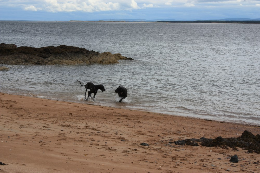 Carnoustie dog-friendly beach and dog walk, Scotland - Dog walks in Scotland