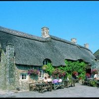 Dog-friendly pub near Barry, Wales - Dog-friendly pub near Barry.jpg
