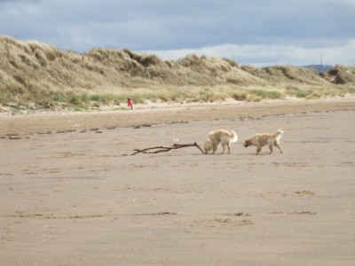 A71 dog-friendly beach in Irvine near Kilmarnock, Scotland - Driving with Dogs