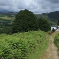 A82 dog-friendly pub and dog walk near Loch Ness, Scotland - Dog walks in Scotland