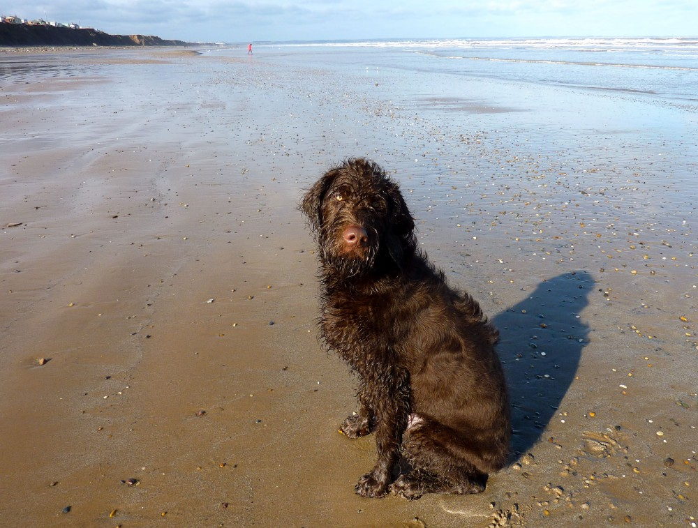 Skipsea to Hornsea dog walk, Yorkshire - Dog walks in Yorkshire