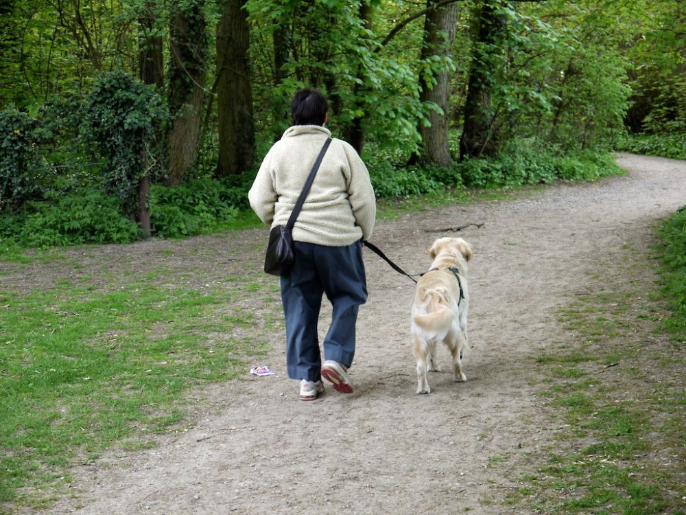 Lotherton Hall dog walk, West Yorkshire - Dog walks in Yorkshire