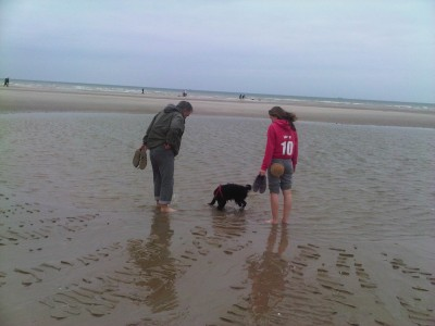 Merlimont Plage dog-friendly beach, France - Driving with Dogs