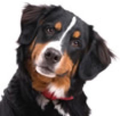 Vet Practice, FEUQUIERES EN VIMEU, France - Driving with Dogs