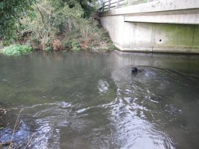Newbury Creek, Berkshire - Driving with Dogs