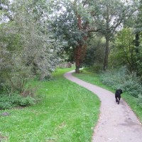Newbury Creek, Berkshire - Berkshire dog walk