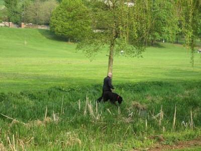 Gadebridge Park local dog walk, Hertfordshire - Driving with Dogs