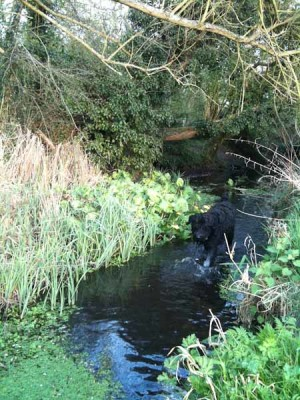 Harpenden dog walk, Hertfordshire - Driving with Dogs
