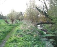Harpenden dog walk, Hertfordshire - Dog walks in Hertfordshire