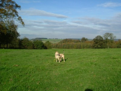 Giltbrook/Kimberley/Moorgreen dog walk, Nottinghamshire - Driving with Dogs