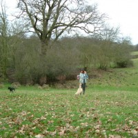 Giltbrook/Kimberley/Moorgreen dog walk, Nottinghamshire - Dog walks in Nottinghamshire