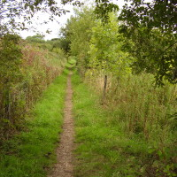 Oxclose Woods dog walk, Nottinghamshire - Dog walks in Nottinghamshire