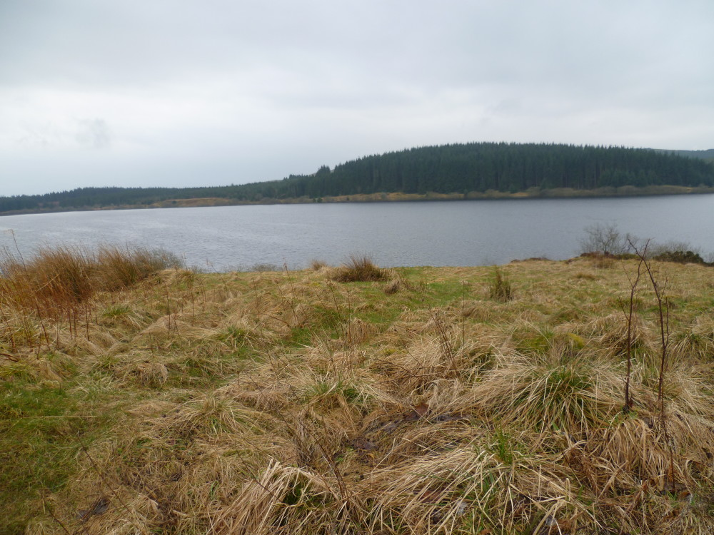 Reservoir dog walk, Anglesey, Wales - Dog walks in Wales