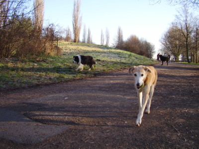 Trent Meadows dog walk, Nottinghamshire - Driving with Dogs