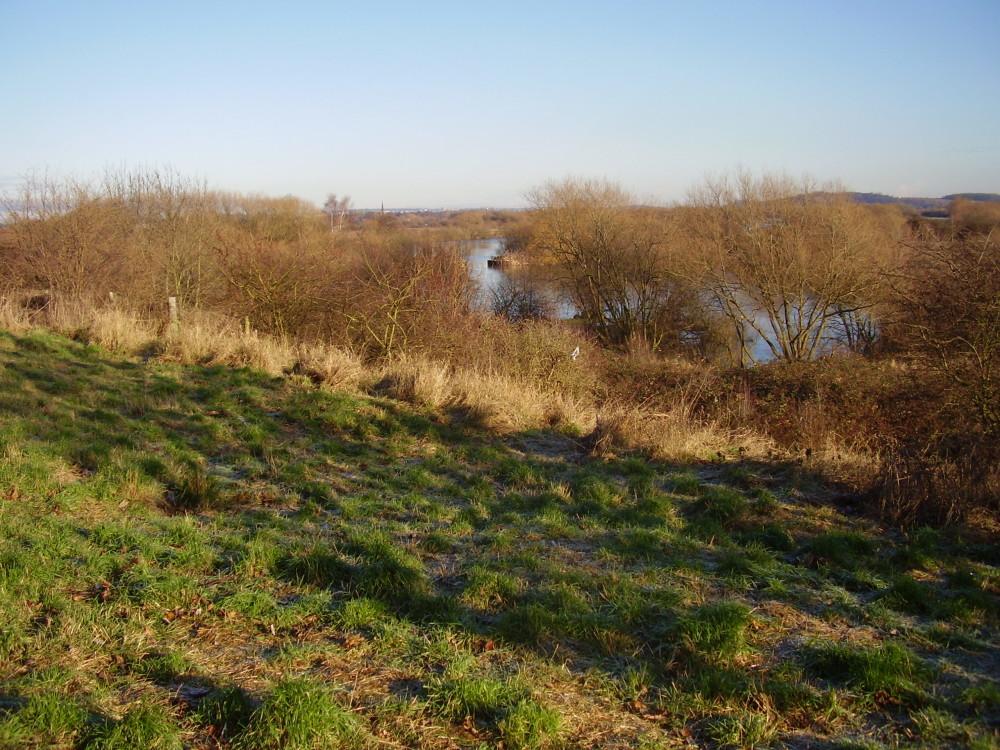 Trent Meadows dog walk, Nottinghamshire - Dog walks in Nottinghamshire