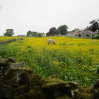 Eyam dog-friendly pub and dog walk, Derbyshire - Peak District dog-friendly pub and dog walk