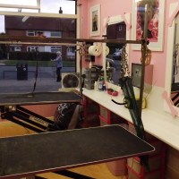 DOGGIE STYLE grooming, West Yorkshire - Image 2