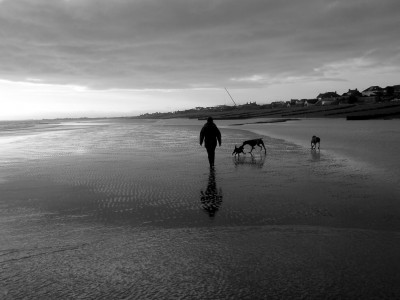 Normans Bay beach and dog walk, East Sussex - Driving with Dogs