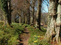 Culzean Castle dog walk, Scotland - Dog walks in Scotland