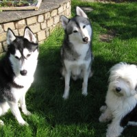 Tunguska - Driving with Dogs